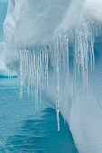 Icicles hang from iceberg, Paradise Harbor, Antarctica