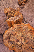 Fossil trees, petrified wood in the Painted Desert, Petrified Forest National Park, Arizona