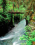 Hiker on the Pony Bridge over the Quinault River, along the trail through the Quinault Rain Forest leading toward the Enchanted Valley, Olympic National Park, Washington, USA, May, M276