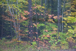 Autumn forest shot through wet windshield on a rainy day, Lake Superior State Forest, Upper Peninsula, Michigan, USA, October, 2007_UP_1511
