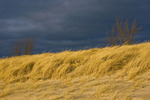 Dune grasses and trees in winter storm light in Stearns Park along Lake Michigan, Ludington, Lower Peninsula, Michigan, USA, December, 2008_MI_6813