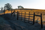 Fence and gate with golden grasses and spreading oaks in the vicinity of Millerton Lake State Recreation Area near Friant and Fresno, California, USA