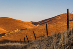 Fence running through golden California Hills in the vicinity of Millerton Lake State Recreation Area near Friant and Fresno, California, USA