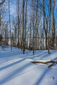 Snowy forest looking out toward South Bay , Grand Island, and Lake Superior, viewed along the Munising Ski Trail, which is operated by the National Park Service in the Sand Point area of Pictured Rocks National Lakeshore in the Upper Peninsula of Michigan, USA