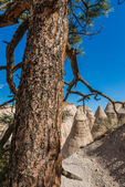 Landscape of cliffs and hoodoos with large Ponderosa Pine, Pinus ponderosa, viewed from high points along the Slot Canyon Trail at Kasha-Katuwe Tent Rocks National Monument in New Mexico, USA