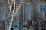 Birch trees in front of the old Brown Fisheries barns at Whitefish Point State Harbor near Paradise in the Upper Peninsula of Michigan, USA [Note: no property release; available for editorial licensing only]