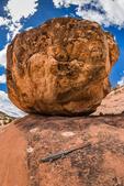 Tree Lizard, Urosaurus ornatus, aka Ornate Tree Lizard, on sandstone slickrock near House on Fire ruin in the South Fork of Mule Canyon in the (proposed, as of 2016) Bears Ears National Monument, near Blanding, Utah, USA