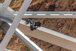 California Condor, Gymnogyps californianus, adult female H9 hopping between girders on the Modern Navajo Bridge, which crosses the Colorado River at Marble Canyon, between Glen Canyon National Recreation Area and the Navajo Nation, Arizona, USA