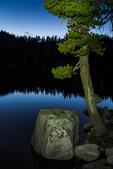 Lodgepole Pine, Pinus contorta, illuminated at twilight along Lake of the Woods in the Desolation Wilderness, Eldorado National Forest, Sierra Nevada, California, USA