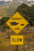 Marmot Crossing sign along road in Great Basin National Park, Nevada, USA