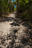 Palmetto shadows on a sandy trail in Bahia Honda State Park, Florida Keys, USA