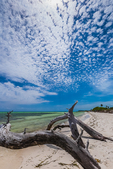 Trees overwhelmed and killed by a changing shoreline in Bahia Honda State Park, Florida Keys, USA