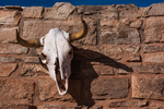 Bleached cow skull above the entrance to Hubbell Trading Post, Hubbell Trading Post National Historic Site within the Navajo Nation, Arizona, USA