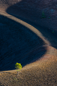 Rim of Cinder Cone in beautiful late afternoon light, with a pioneering pine tree, at the summit of the Cinder Cone Trail from Butte Lake Campground to Cinder Cone in Lassen Volcanic National Park, California, USA