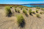 Sand dunes near the White Bluffs in Hanford Reach National Monument, Columbia River Basin, Washington State, USA