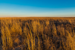 Shortgrass Steppe prairie grassland on Bureau of Land Management land near Caprock in eastern New Mexico, USA
