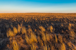Shortgrass Steppe prairie grassland on Bureau of Land Management land near Caprock in eastern New Mexico, USA