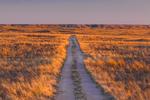 Road through Shortgrass Steppe prairie grassland on Bureau of Land Management land near Caprock in eastern New Mexico, USA