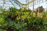 Ferns thriving in the moist climate of The Fernery within the Anna Scripps Whitcomb Conservatory in Belle Isle Park, Detroit, Michigan, USA