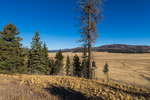 Valles Grande, formed from a collapsed volcanic caldera and now home to a large elk herd, in Valles Caldera National Preserve, a preserve run by the National Park Service, New Mexico, USA