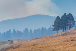 Ranch vehicles traveling through the smoky air from a prescribed burn in Valles Caldera National Preserve, a preserve run by the National Park Service, New Mexico, USA
