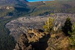 View from Paulina Peak, looking down on Big Obsidian Flow and a Whitebark Pine, Pinus albicaulis, in Newberry National Volcanic Monument, central Oregon, USA