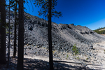 Lodgepole Pines, Pinus contorta, at the end of the Big Obsidian Flow in Newberry National Volcanic Monument, central Oregon, USA