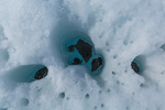 Pattern of holes created by little stones melting through the snow on Matanuska Glacier, northeast of Anchorage, Alaska, USA