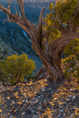 in the Wild Rivers Area of Rio Grande del Norte National Monument near Taos, New Mexico, USA