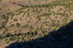Pinyon-Juniper Forest in the Wild Rivers Area of Rio Grande del Norte National Monument near Taos, New Mexico, USA