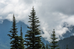Conifer trees and unsettle weather along the trail to Mount Townsend in the Buckhorn Wilderness, Olympic National Forest, Washington State, USA