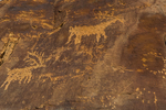 Elk and other petroglyphs high on a sanstone wall in Nine Mile Canyon, Utah, USA