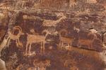 Petroglyh portraying Desert Bighorn Sheep in Nine Mile Canyon, Utah, USA