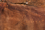 Petroglyphs with fine interior lines depicting game animals in Nine Mile Canyon, Utah, USA