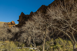 Bare trees of late autumn silhouetted against the sandstone walls of Nine Mile Canyon, Utah, USA