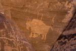 Bison petroglyph in Nine Mile Canyon, Utah, USA