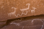Petroglyph of group of Bighorn Sheep, including a young one, with a snake-like figure in Nine Mile Canyon, Utah, USA