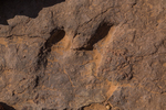 Allosaurus, a carnivorous dinosaur, track along the trail into Horseshoe Canyon in Canyonlands National Park, Utah, USA