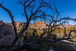 Dead tree among the colorful sandstone formations within Salt Creek Canyon in The Needles District of Canyonlands National Park, Utah, USA