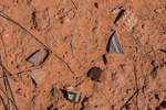 Potsherds and other artifacts left by the Ancestral Puebloan people living within Salt Creek Canyon in The Needles District of Canyonlands National Park, Utah, USA