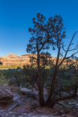 View of Salt Creek Canyon from Big Ruin, an Ancestral Pueblo village site in The Needles District of Canyonlands National Park, Utah, USA