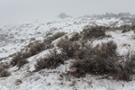 Snow falling on the dunes of Coral Pink Sand Dunes State Park, Utah, USA