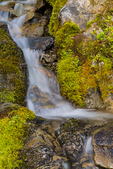Small mossy stream in Grand Valley in Olympic National Park, Washington State, USA