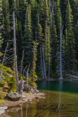 Shore of Moose Lake,  Grand Valley in Olympic National Park, Washington State, USA