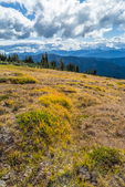 Alpine tundra on mountainside near Obstruction Point in Olympic National Park, Washington State, USA