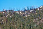 Aftermath of the 2009 Big Meadow Fire in Yosemite National Park, which began as a prescribed burn and turned into major wildfire, California, USA, Big_Meadow_Fire-4