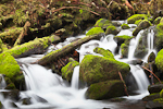 A small tributary stream  of the Sol Duc River cascades over mossy boulders in Olympic National Park, Washington, USA, February, Olympic_National_Park_Sol_Duc-6382