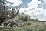 Aftermath of the 11 June 2008 tornado that struck the Little Sioux Scout Ranch, killing 4 Boy Scouts and injuring 48 others, in the Loess Hills along the Missouri River Valley in western Iowa, USA, 2008_IA_0243