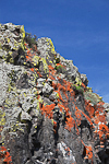 Lichen-covered basalt cliffs in the Whiskey Dick Unit of L. T. Murray Wildlife Area (Washington State Department of Natural Resources), Whiskey Dick Mountain near the Columbia River, Washington State, USA, May, Whiskey_Dick-15