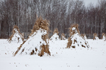 Cornstalks in the snow, stacked in the field by an Amish farmer in an Amish colony near Stanwood, Michigan, USA, December, Michigan_Amish-55
